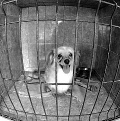 SAVE THE DOGS 2015 - Cernavoda