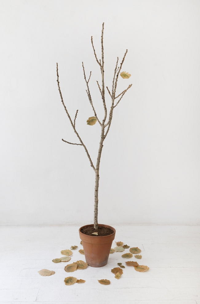 The plant of points of view - installation, 2020 - Cherry branch, terracotta pot, topsoil, hazel leaves with chlorophyll print of self-portrait eyes 165x50 cm