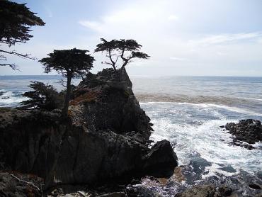 Lone Cypress of Pebble Beach - California - U.S.A.