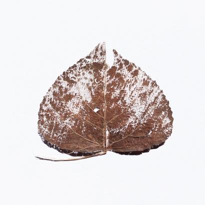 Leaf, Alghero  - 23/07/2018