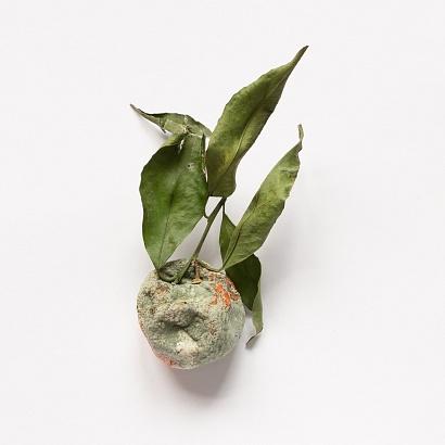 Moldy mandarin, my home - 27/01/2019